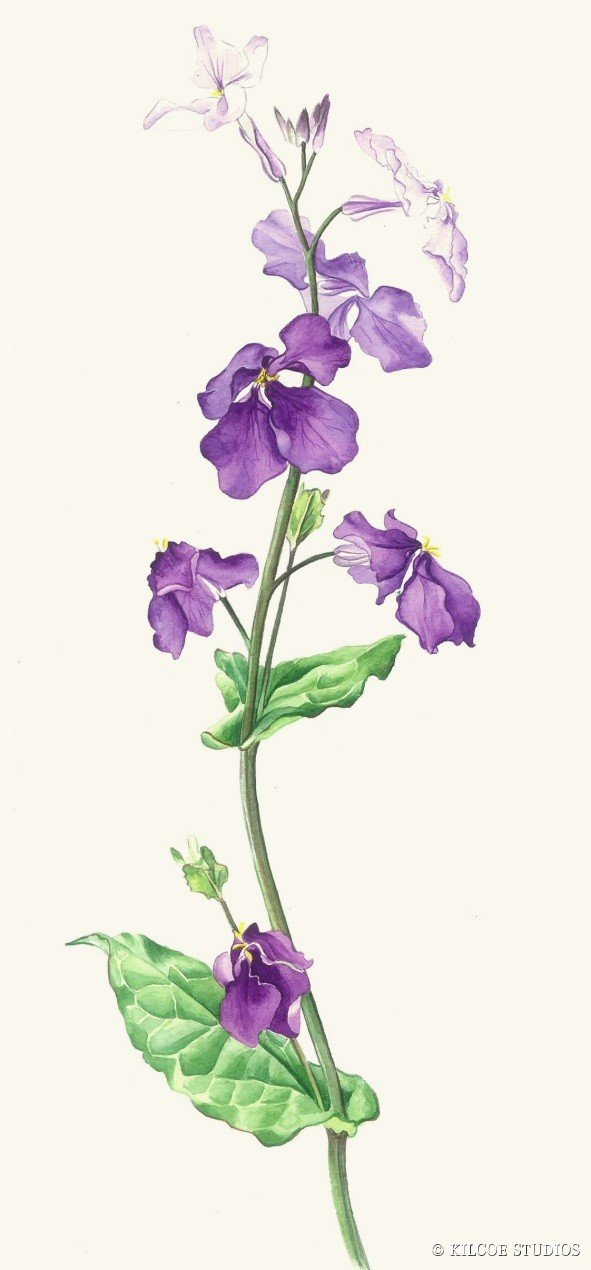Greeting card - february orchid - 10cm x 21 cm