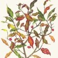 Greeting card - Spindle