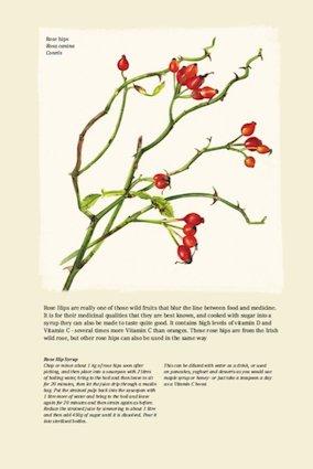 December - Rose hips