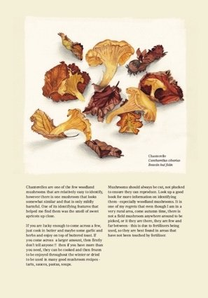 October - Chanterelles
