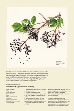 September  - Elderberry