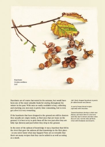 January - Hazelnuts