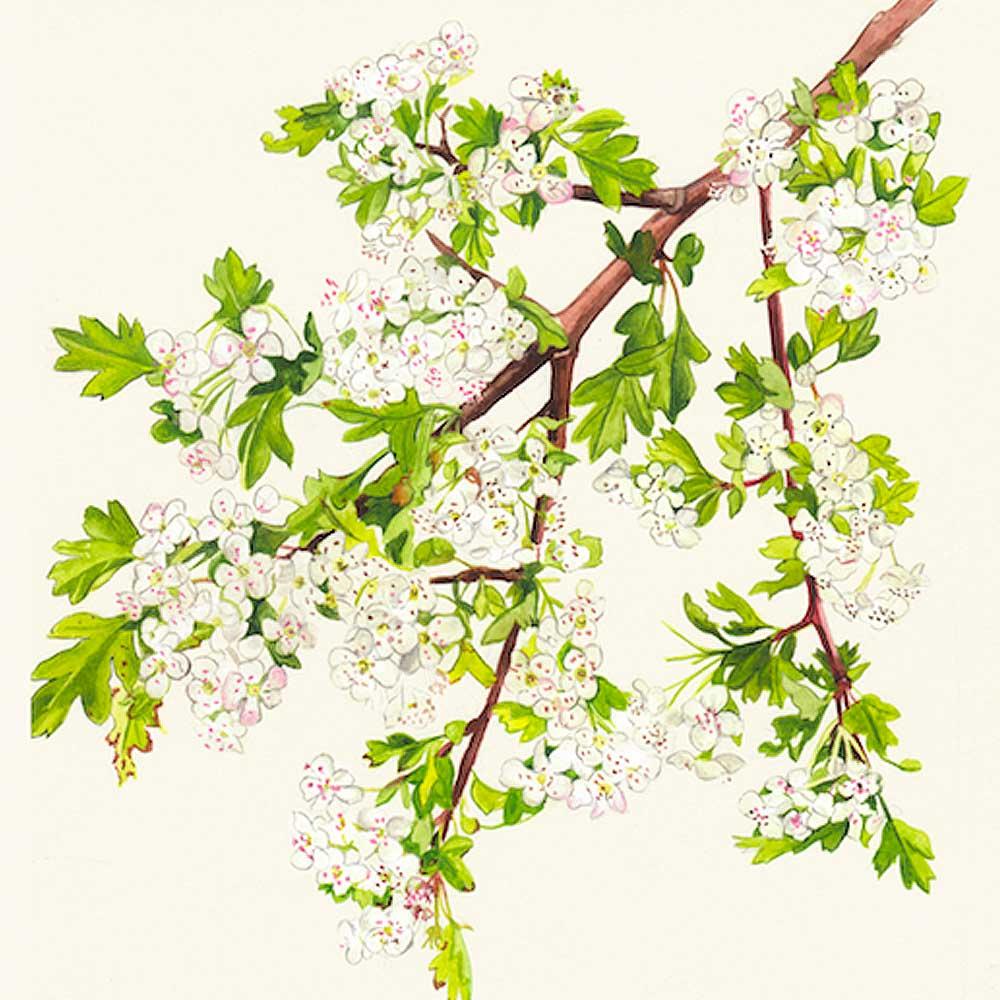 6 pack greeting cards native irish trees kilcoe studios kristyandbryce Choice Image