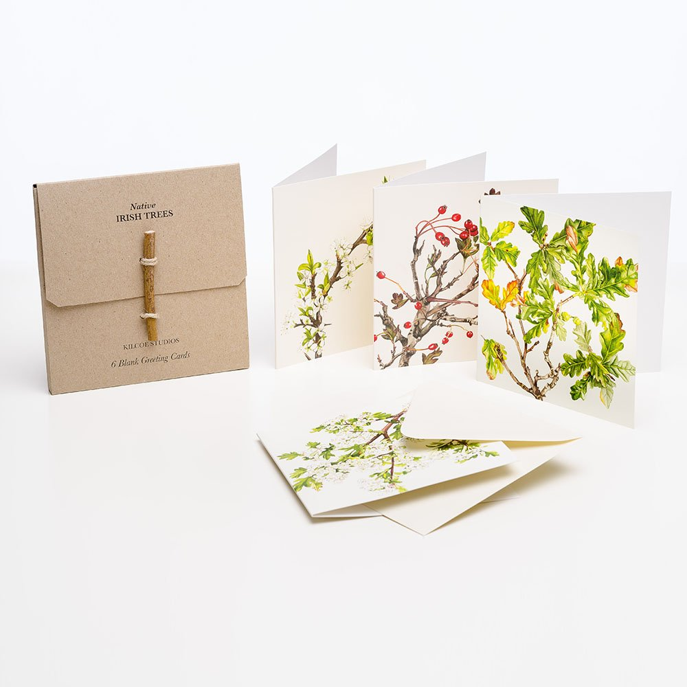 6 pack greeting cards native irish trees kilcoe studios 6 pack greeting cards kristyandbryce Image collections